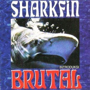 Sharkfin 歌手頭像