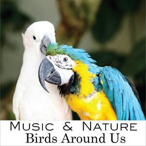 Music & Nature 歌手頭像