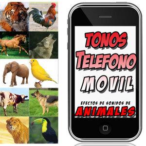 Estudio de Sonido Celular iPhone