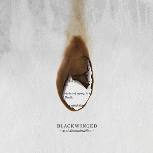 Blackwinged 歌手頭像