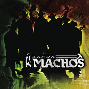 Banda Machos 歌手頭像