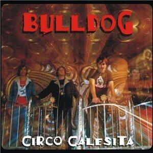 Bulldog 歌手頭像