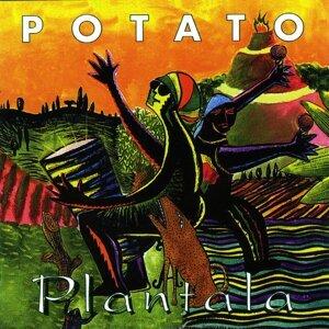 Potato 歌手頭像