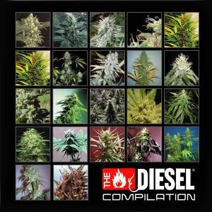 THE DIESEL COMPILATION 歌手頭像