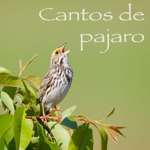 Cantos De Pajaro 歌手頭像