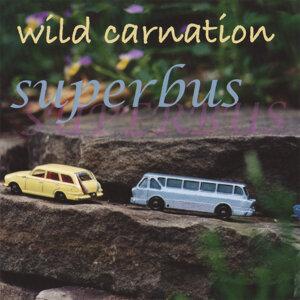 Wild Carnation 歌手頭像