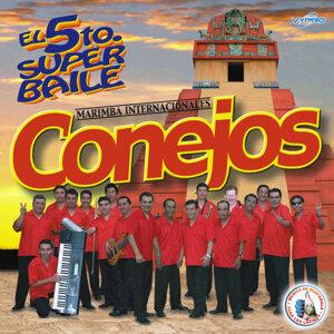 Marimba Internacionales Conejos 歌手頭像