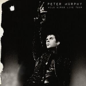 Peter Murphy 歌手頭像
