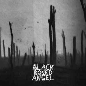 Black Boned Angel 歌手頭像