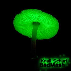 Knall Scharf 歌手頭像