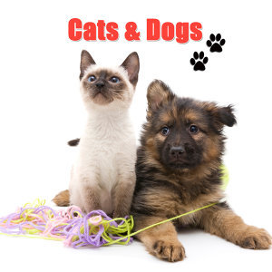Cats & Dogs 歌手頭像