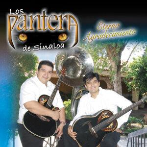 Los Pantera De Sinaloa 歌手頭像