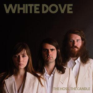 White Dove 歌手頭像