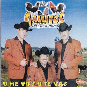Los Gallitos de Chihuahua 歌手頭像