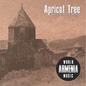 Apricot tree 歌手頭像