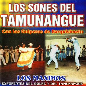 Los Golperos de Barquisimeto 歌手頭像