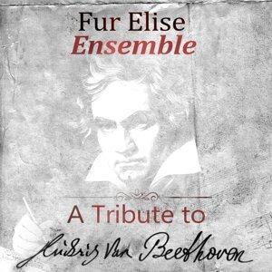 Fur Elise Ensemble 歌手頭像