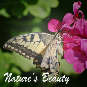 Nature's Sound 歌手頭像