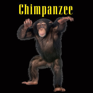 Chimpanzee Sounds 歌手頭像