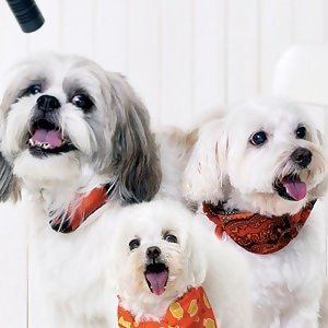 Doggie Trio (三狗組) 歌手頭像