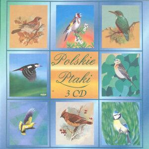 Polskie Ptaki