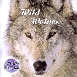 Natures's Rhythm's