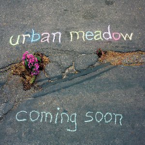 Urban Meadow 歌手頭像