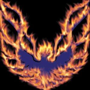 Firebird 歌手頭像