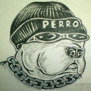 Perro 歌手頭像