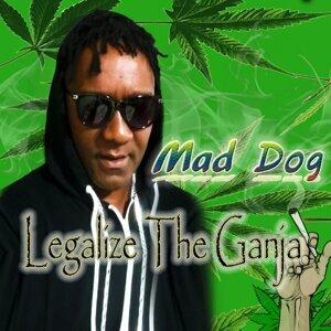 Mad Dog 歌手頭像