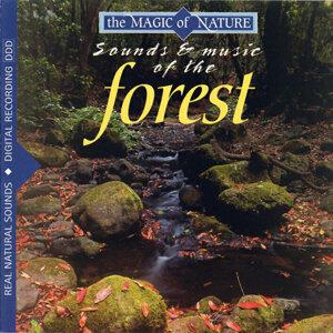 Magic Of Nature 歌手頭像