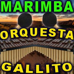 Marimba Orquesta Gallito