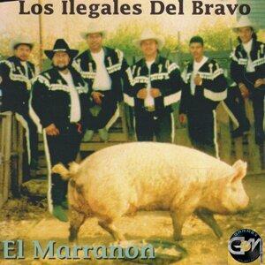 Los Ilegales Del Bravo 歌手頭像