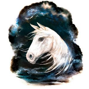 Stormhorse 歌手頭像