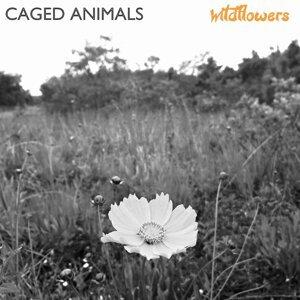 Caged Animals 歌手頭像