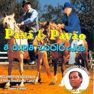Paxá e Pavão 歌手頭像