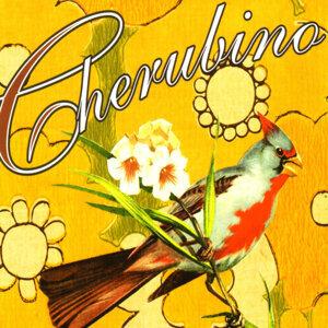 Cherubino 歌手頭像
