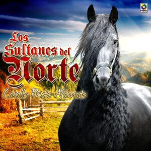 Los Sultanes Del Norte