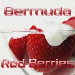 Bermuda 歌手頭像