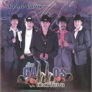 Los Gallos De Mi Tierra 歌手頭像