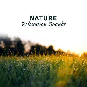 Relaxing Sounds of Nature 歌手頭像