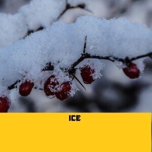 Ice アーティスト写真