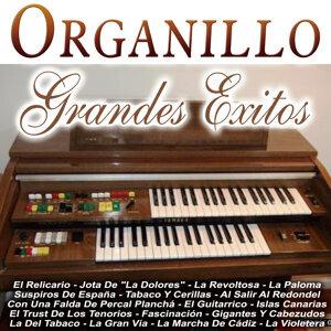 Organillo