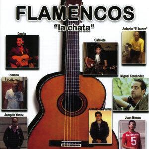 Flamencos 歌手頭像