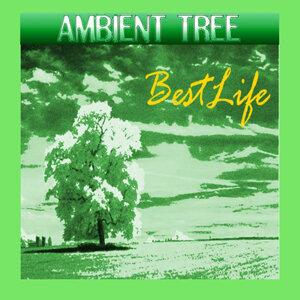 Ambient Tree 歌手頭像
