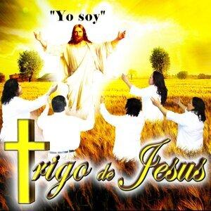 Trigo De Jesus 歌手頭像