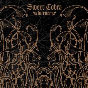 Sweet Cobra 歌手頭像