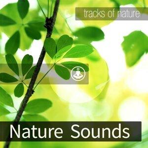 Tracks of Nature 歌手頭像