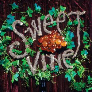Sweet Vine 歌手頭像