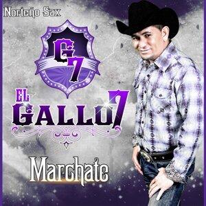 El Gallo 7 歌手頭像